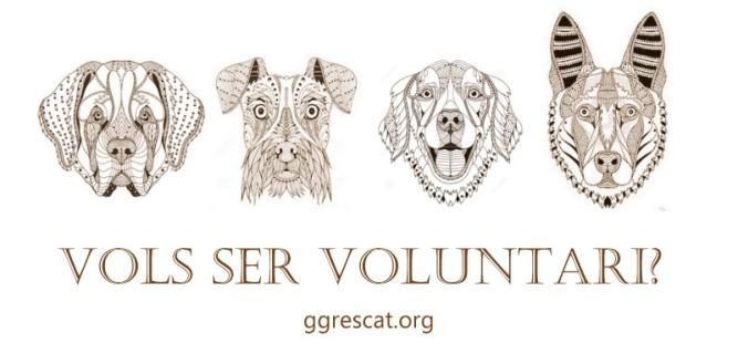 voluntairos